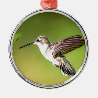 Kolibrie tijdens de vlucht zilverkleurig rond ornament