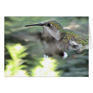Kolibries 2005-0413a briefkaarten 0