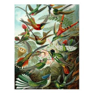Kolibries door Ernst Haeckel, de Vintage Bomen van Briefkaart