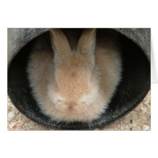 konijn in een pijp briefkaarten 0