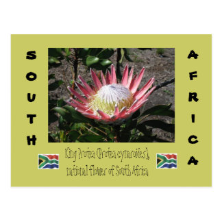Koning Protea Briefkaart
