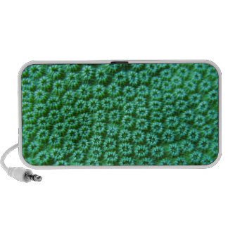 Koralen ook iPhone luidsprekers