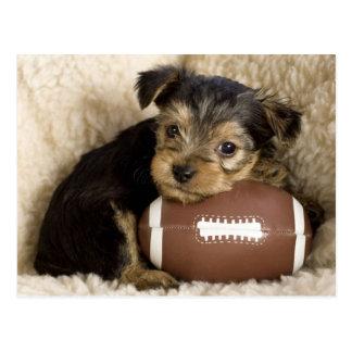 Kostbaar Puppy op een Football Briefkaart