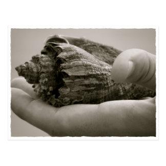 Kroonslak in Hand Shell Briefkaart