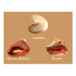 Kroonslak, Nautilus, de Helm van het Queens Briefkaart