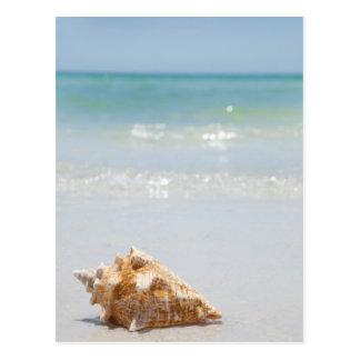 Kroonslak Shell op Strand   Florida, St. Briefkaart