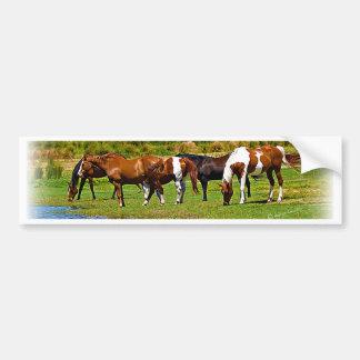 Kudde van Paarden Bumpersticker