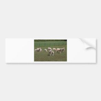 Kudde van schapen bumpersticker