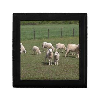 Kudde van schapen decoratiedoosje