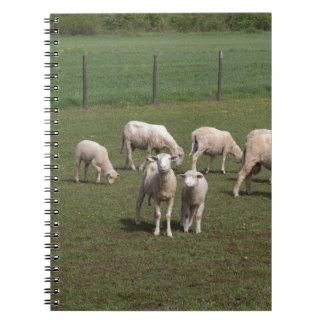 Kudde van schapen ringband notitieboek