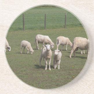 Kudde van schapen zandsteen onderzetter