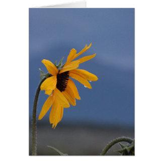 Kunnen de Zonnebloemen schreeuwen? Briefkaarten 0