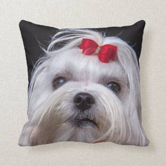 Kussen van de Maltese hond van het hond kleine