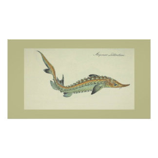 Kust - vintage vissendruk poster