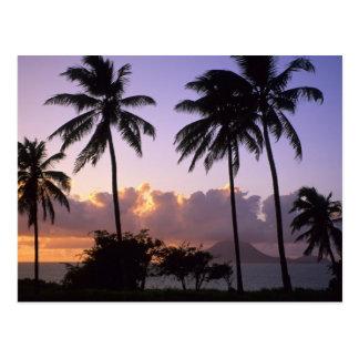 Kustlijn St. Kitts Briefkaart