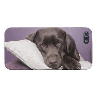 Labrador retriever van de chocolade hond slaperig  iPhone 5 hoesje