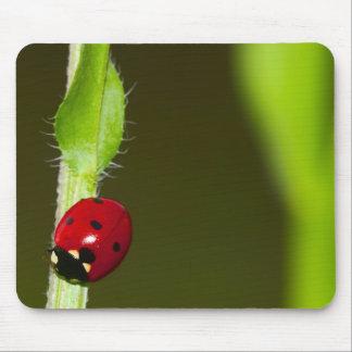 Ladybeetle mousepad muismatten