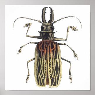 Lang-gehoornde Kever, Prionus Cervicornis Poster