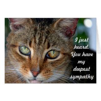 Late kattensympathie briefkaarten 0