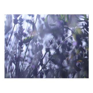 Lavendel Briefkaart