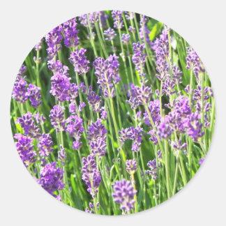 Lavendel in het Gras Ronde Sticker