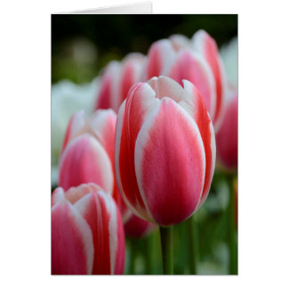 Leeg Wenskaart met Roze Tulpen