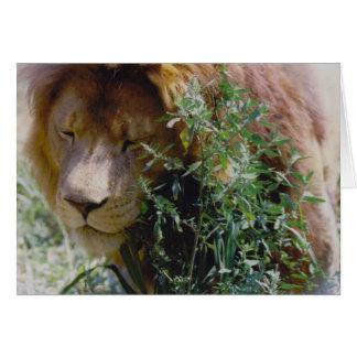 Leeuw Briefkaarten 0
