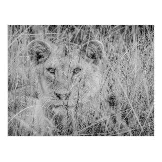 Leeuw in het Briefkaart van het Gras