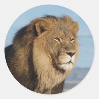 Leeuw Ronde Sticker