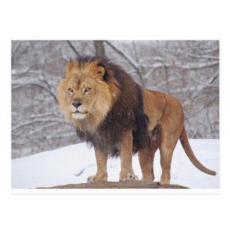 Leeuwen Briefkaart