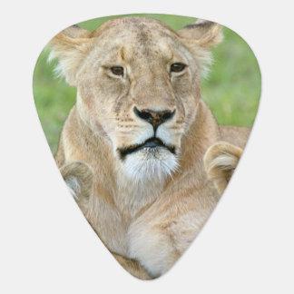 Leeuwin en Twee Welpen, Oost-Afrika, Tanzania, Plectrum