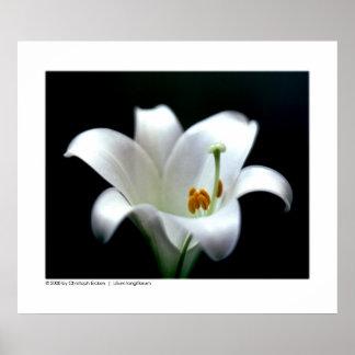 Lelie | van Pasen longiflorum Lilium Poster