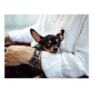 Leuk & Grappig briefkaart Chihuahua
