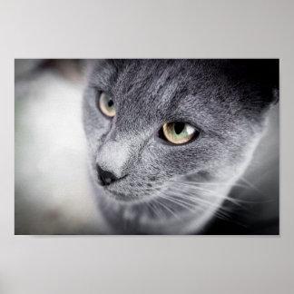 Leuk kattenposter poster