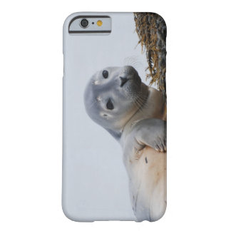 Leuk Zeehondejong Barely There iPhone 6 Hoesje