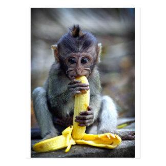 Leuke baby macaque aap die banaan eten briefkaart