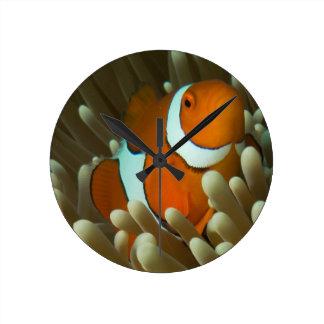 Leuke Clownfish op het Grote Barrièrerif Ronde Klok