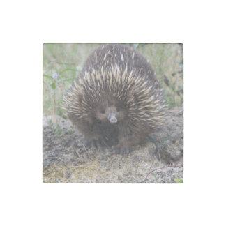 Leuke Echidna van Australië Stenen Magneet