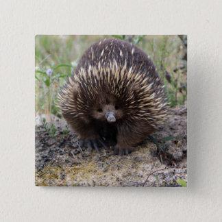 Leuke Echidna van Australië Vierkante Button 5,1 Cm