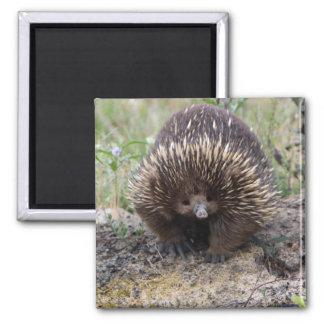 Leuke Echidna van Australië Vierkante Magneet