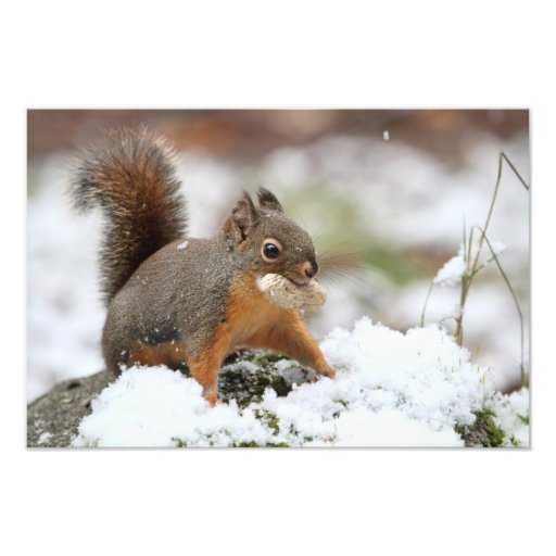 Leuke Eekhoorn in Sneeuw met Pinda Foto Kunst