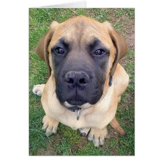 Leuke Engelse Mastiff de hondfoto van misser You- Kaart