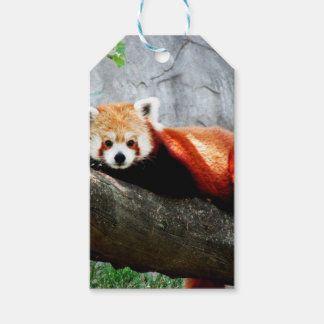 leuke grappige dierlijke rode panda cadeaulabel