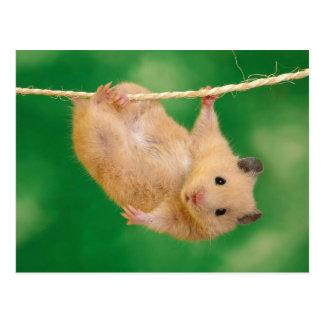 Leuke Hamster Briefkaart