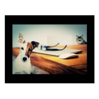 Leuke Hond en Kat in het Briefkaart van het