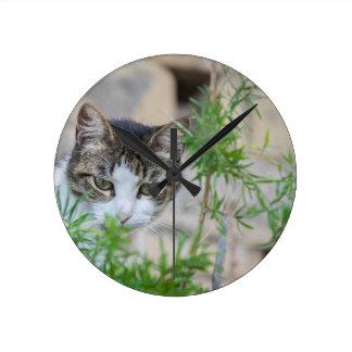Leuke kat voor elke dag ronde klok