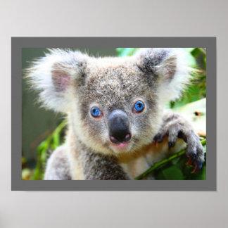 Leuke Koala Poster