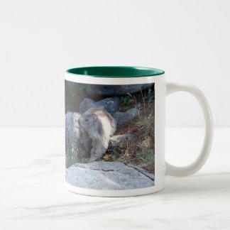 Leuke marmot -- Zwitserse mok