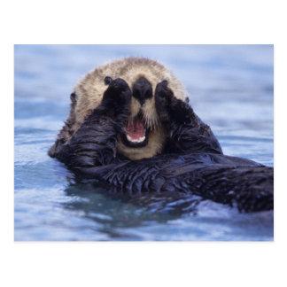 Leuke Otter | van het Zee Alaska, de V.S. Briefkaart