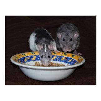 Leuke Ratten die Briefkaart eten